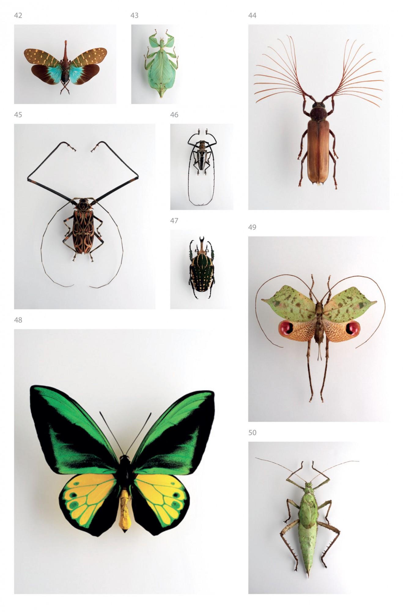 confluences_insectes